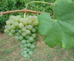 Foto: www.wine-searcher.com